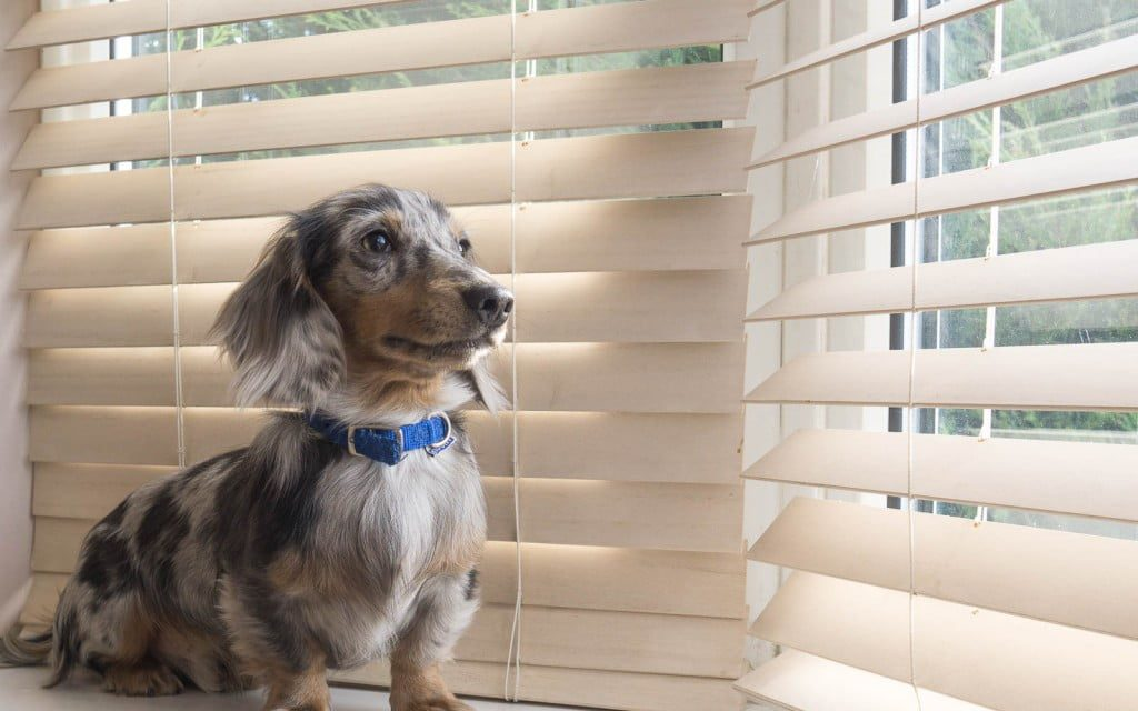 Pet Friendly Blinds